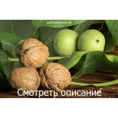 Грецкий орех Буковинская бомба