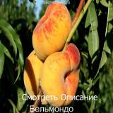 Инжирный Персик Бельмондо